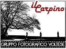 logo4_GF IL CARPINO